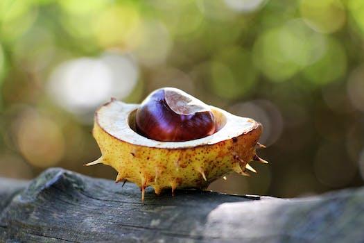 Kostenloses Stock Foto zu essen, gesund, pflanze, früchte