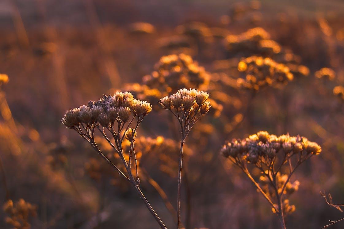 flora, jasny, kolor