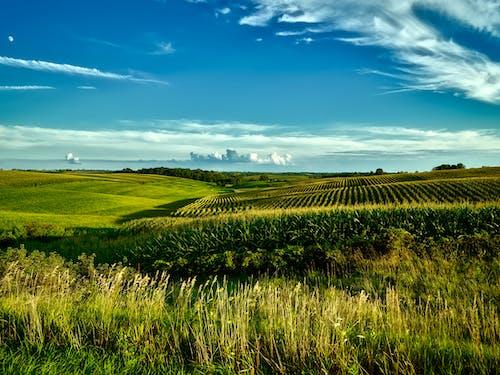 Immagine gratuita di azienda agricola, campi, campo, campo di fieno