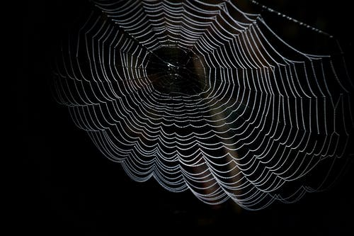 Closeup Photography of Spider Web