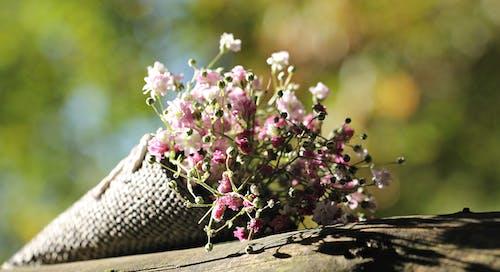 Pink Petaled Flowers on Brown Tree Trunk