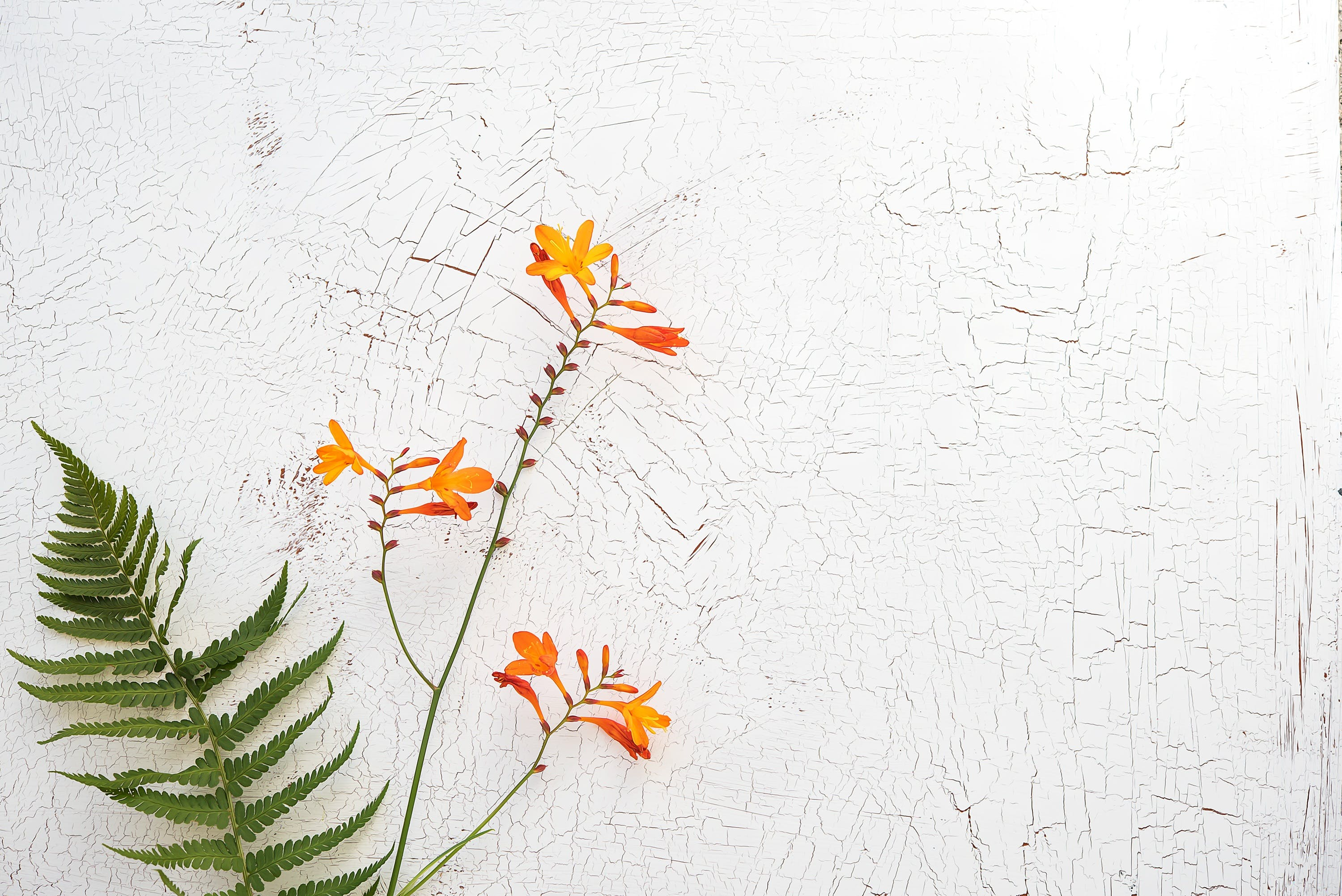 Free stock photo of texture, orange, flower, bloom