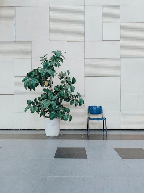 Darmowe zdjęcie z galerii z architektura, krzesło, minimalista, minimalistyczny