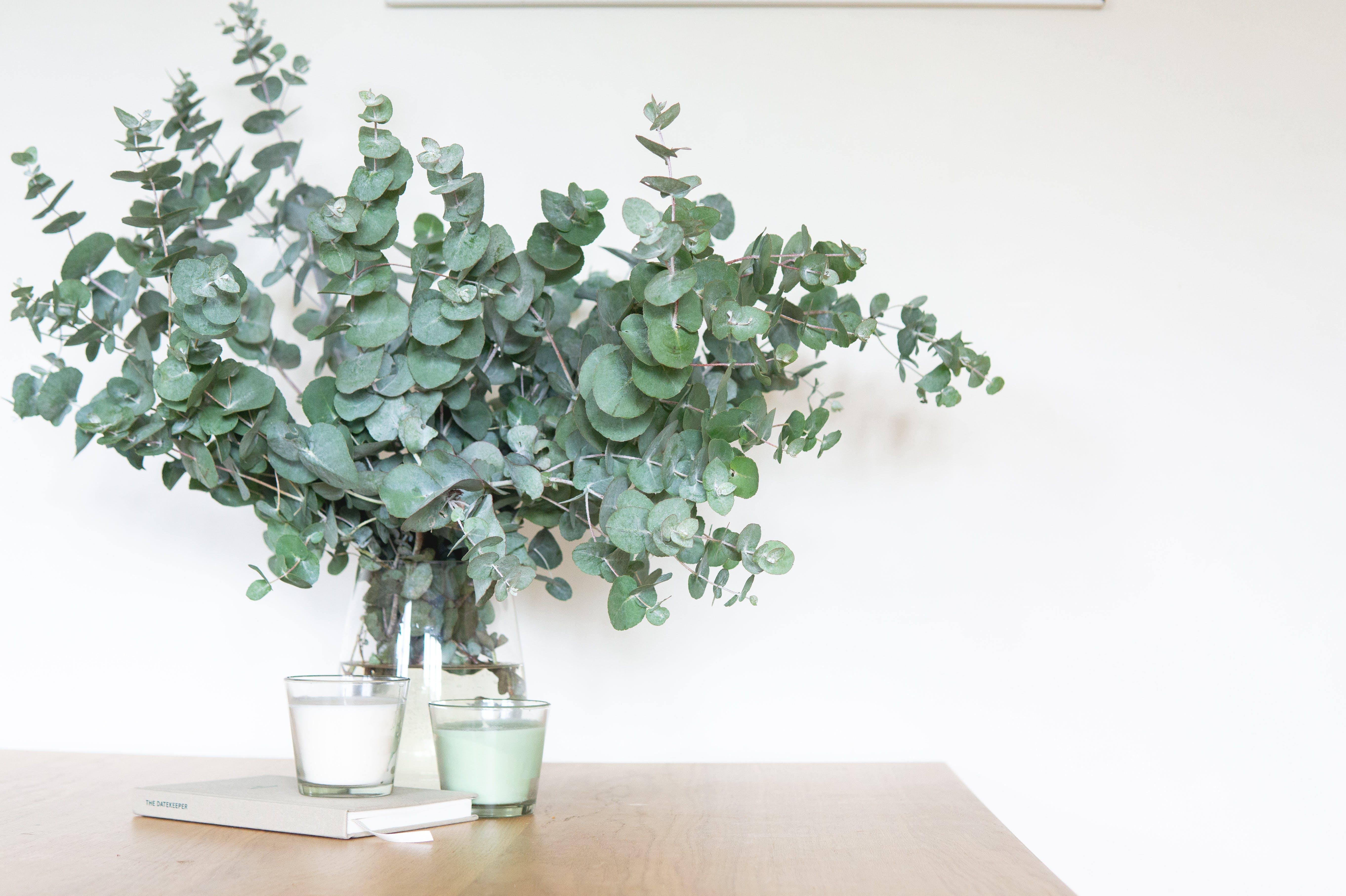 Green-leafed Indoor Plant