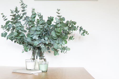 Green-leafed Indoor Plant