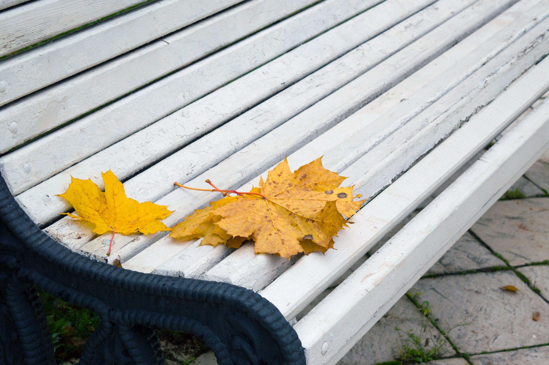 Free stock photo of bench, nature, yellow, date