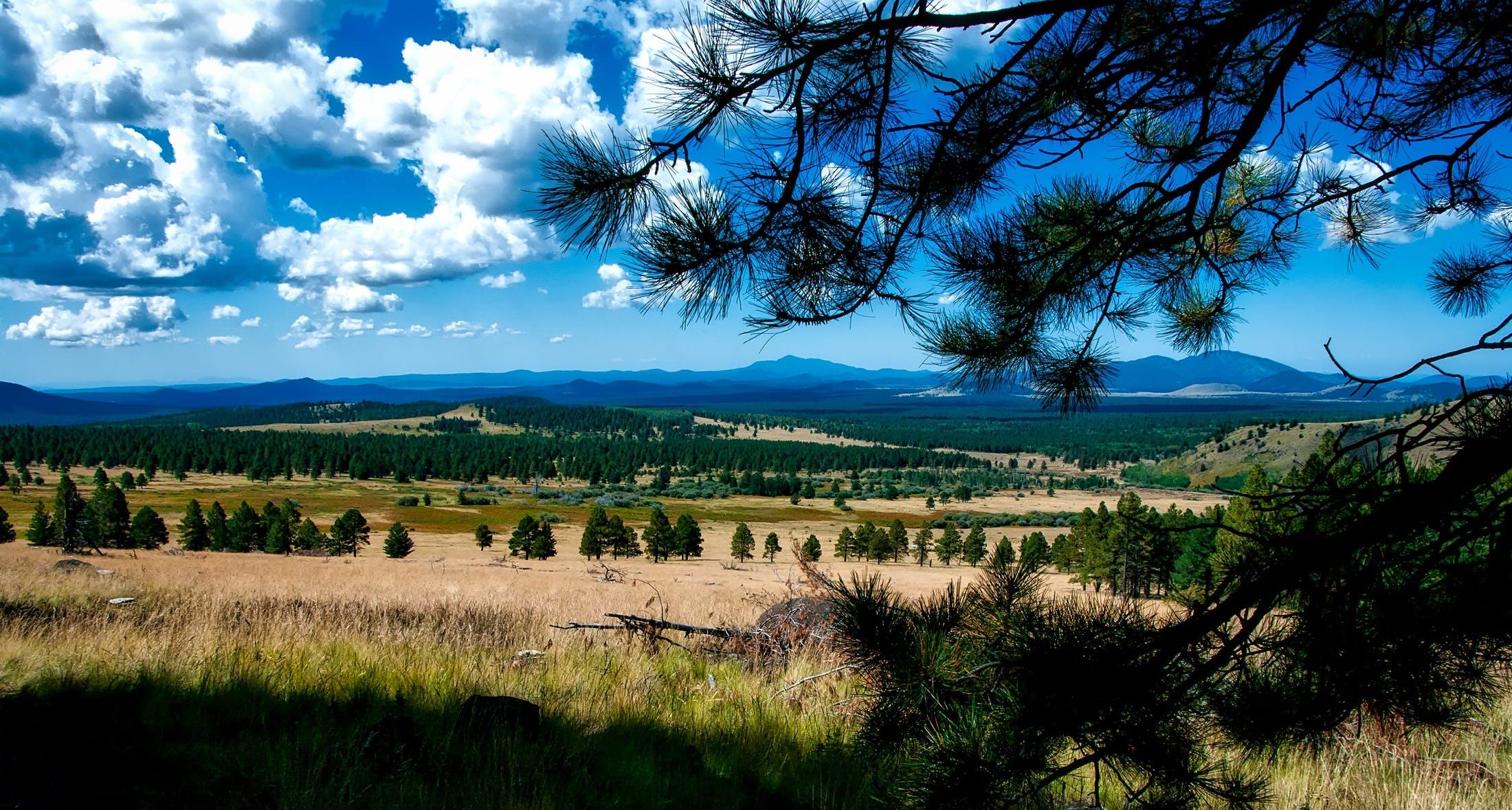 Gratis lagerfoto af bane, bjerge, eng, græs