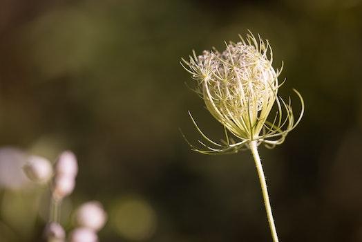 Free stock photo of light, summer, blur, flower