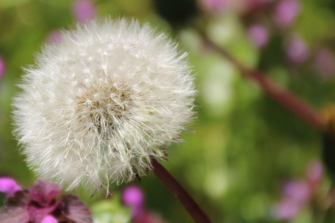blomma, flora, makro