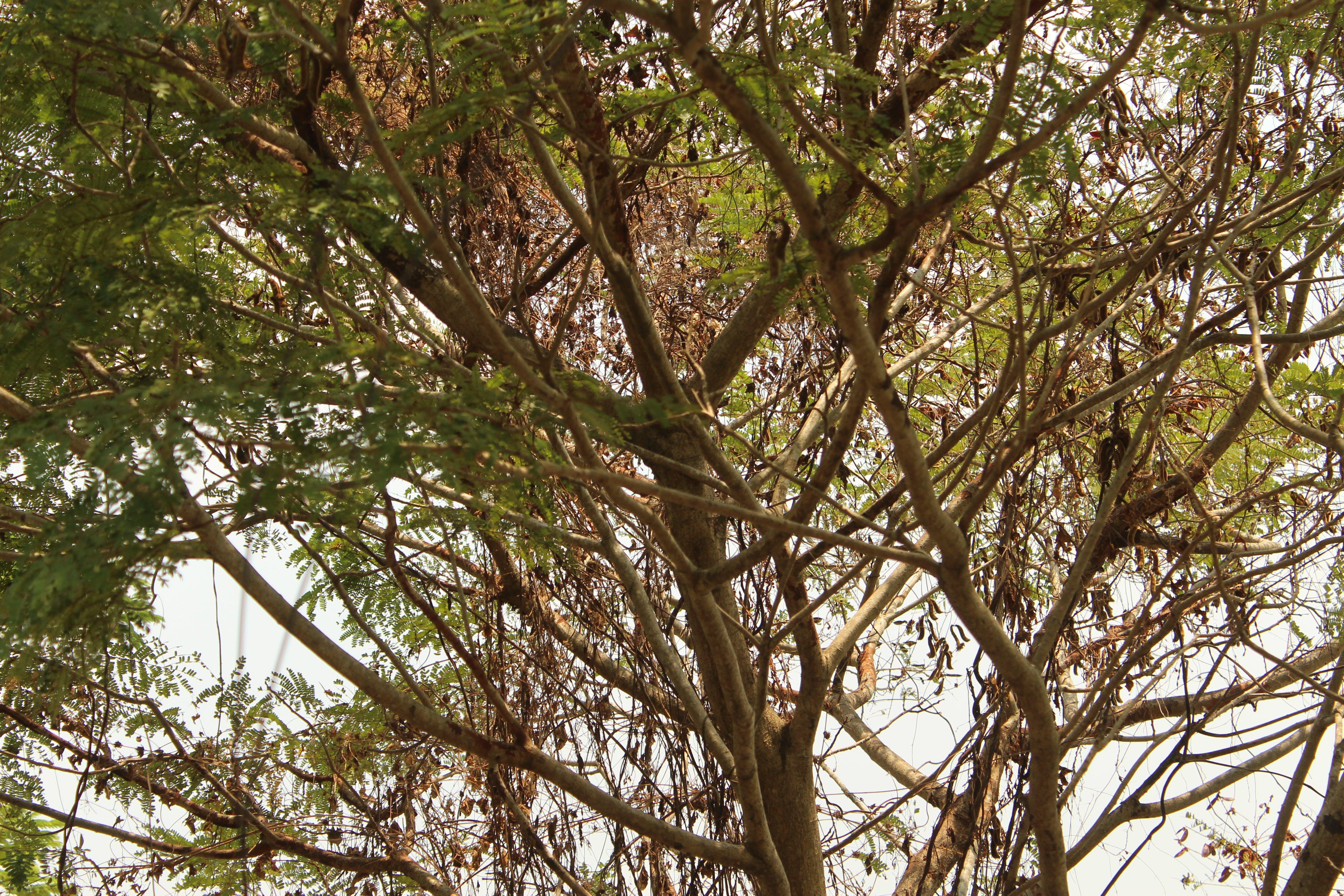 Kostenloses Stock Foto zu baum nahaufnahmeansicht, bäume, gefällter baum, hohe bäume