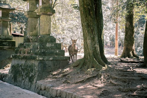 Foto profissional grátis de animal, árvores, aumento, cênico
