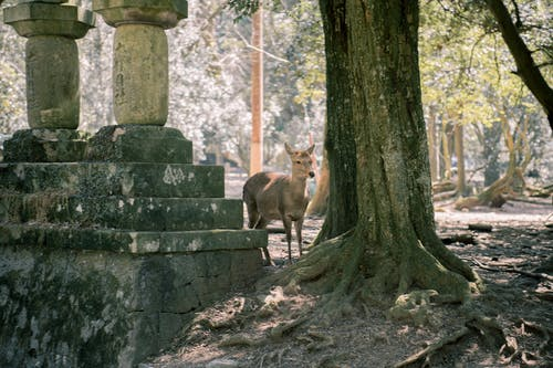 Foto profissional grátis de aconselhamento, animal, árvores, aumento