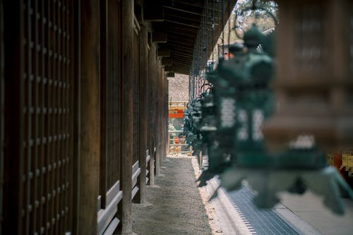 Foto profissional grátis de kasuga taisha, nara