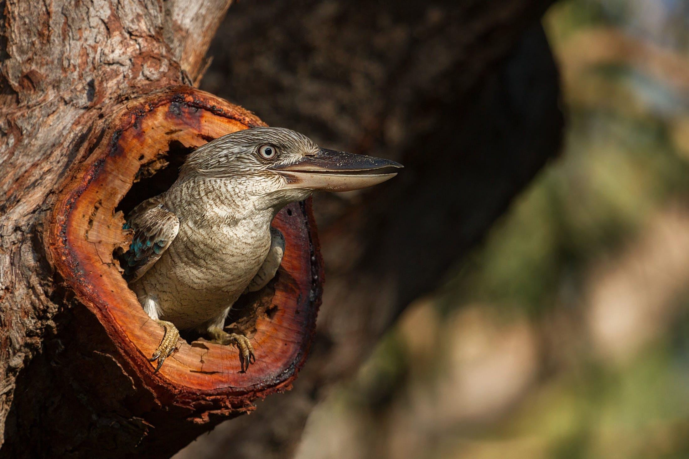 Gray Bird on Tree