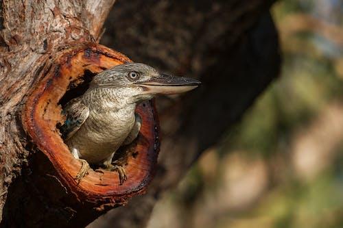 Gratis lagerfoto af arter, Australien, close-up, dagslys