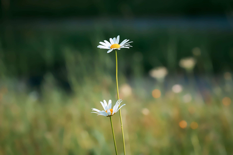 Free stock photo of nature, summer, plant, white