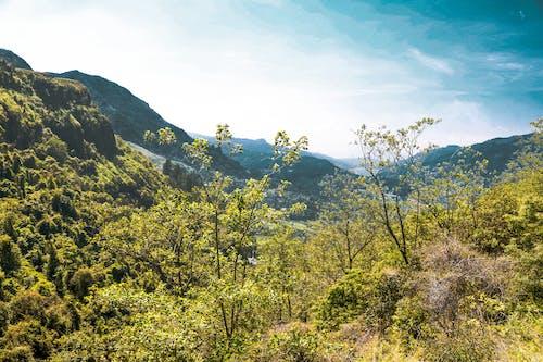 Darmowe zdjęcie z galerii z drzewa, góra, las, natura