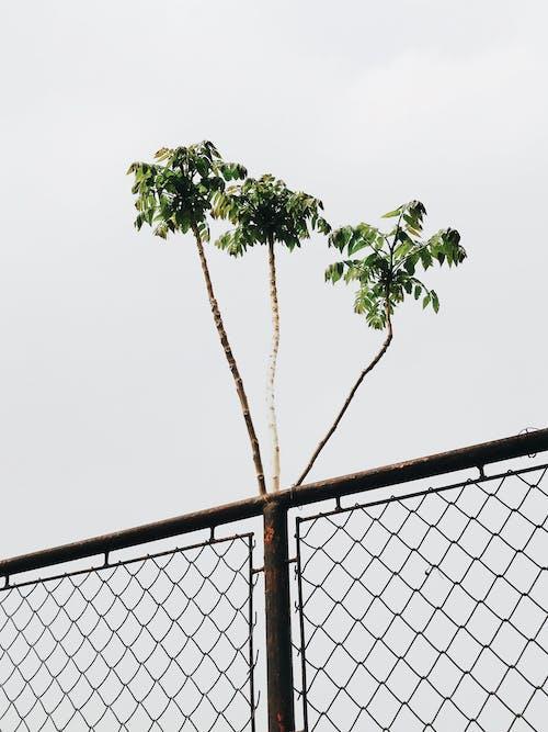 Fotobanka sbezplatnými fotkami na tému drôtený plot, hrdzavý, ohrada, podhľad