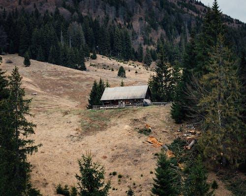 4k duvar kağıdı, ağaçlar, arka fon, Avrupa içeren Ücretsiz stok fotoğraf