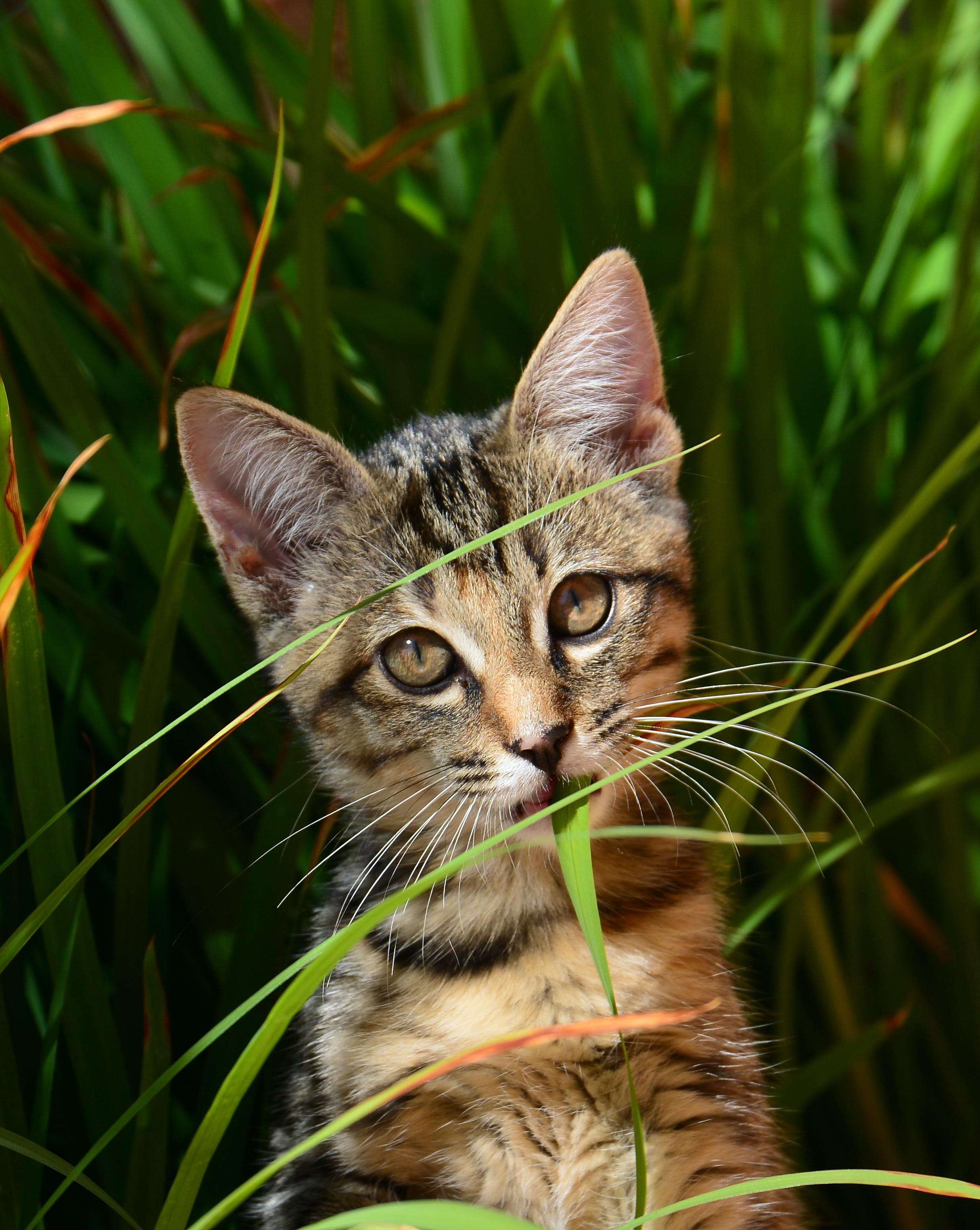 Grey and Brown Tabby Cat Surrounded by Green Leaf