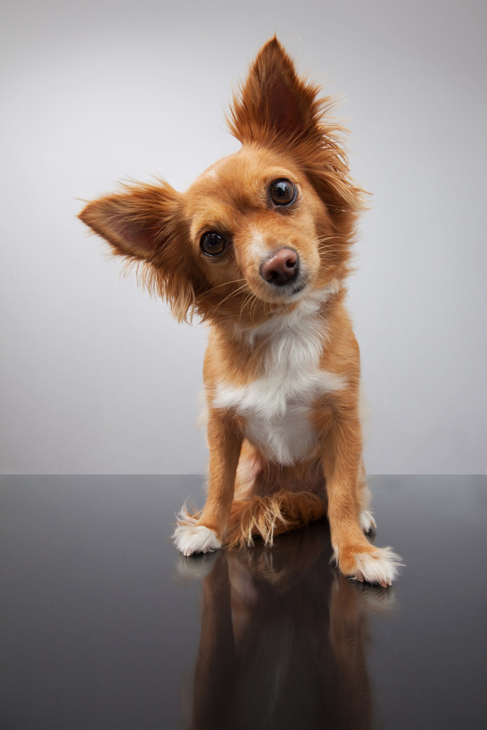 Free stock photo of animal, cute, dog, doggy