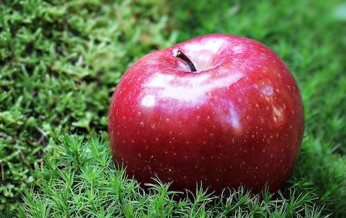 Kostnadsfri bild av äpple, äta, färsk, fokus