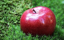 healthy, apple, grass