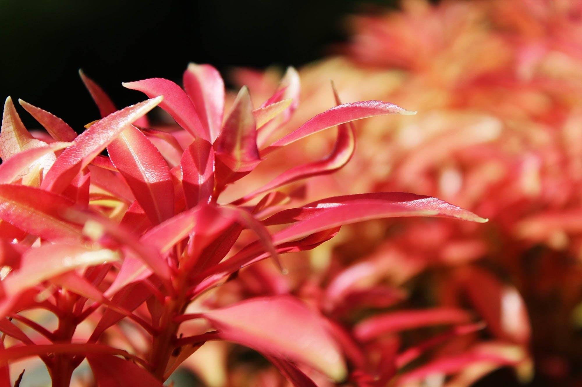 Free stock photo of botany, bush, close, flora