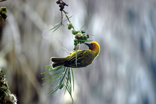 Selective Focus Photography of Weaver Perching on Branch