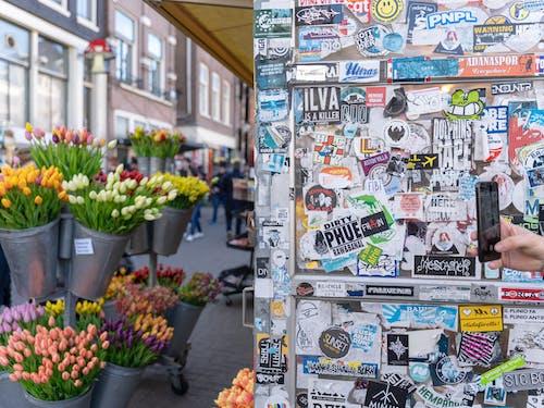 花, 花卉市场, 貼紙 的 免费素材照片