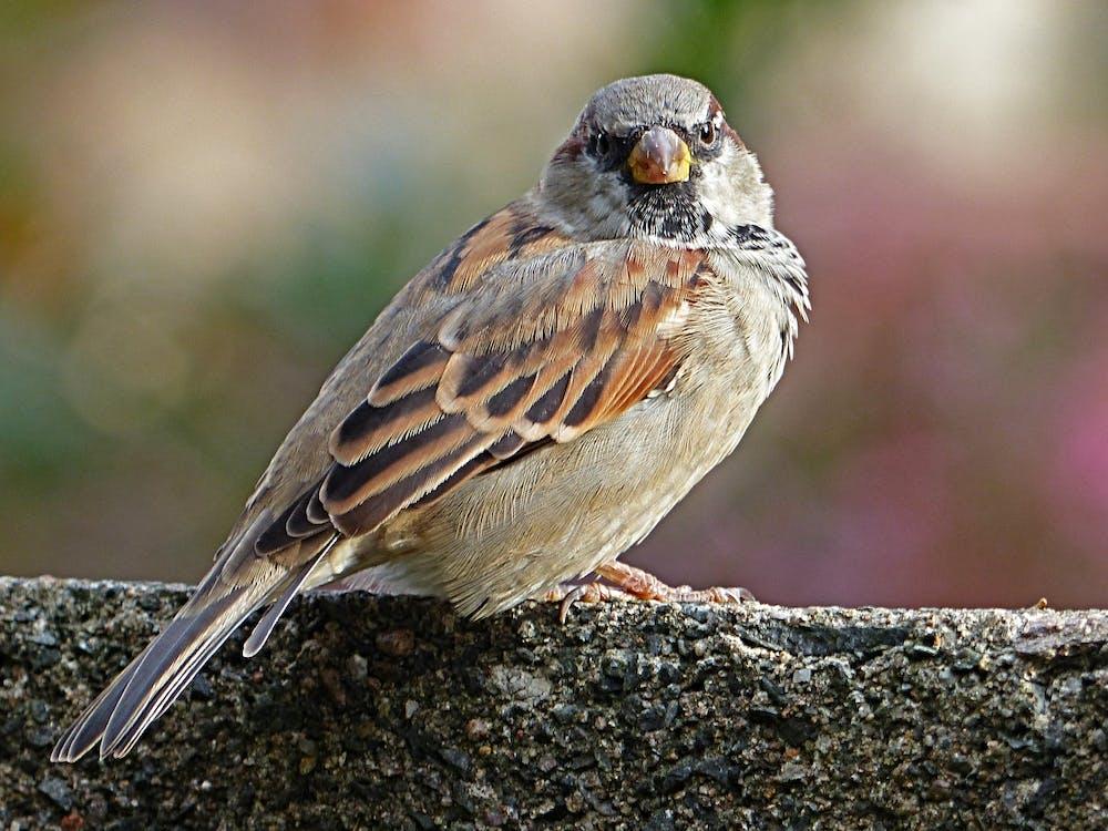 Brown Bird Standing on Gray Concrete