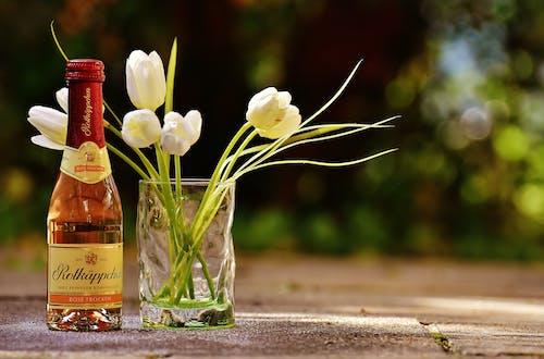 Gratis stockfoto met achtergrond, alcohol, bloem, bloemen