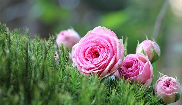 HD wallpaper of flowers, grass, petals, plant