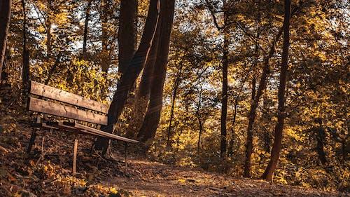 Kostnadsfri bild av skog, träbänk