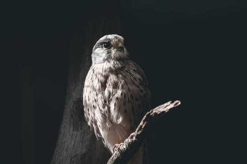 Grey and Brown Owl on Tree Branch at Night