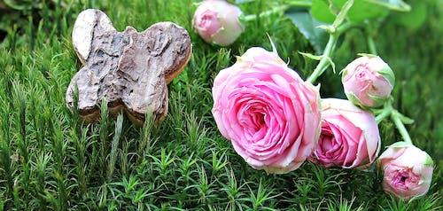 Kostenloses Stock Foto zu blühen, blumen, farbe, flora
