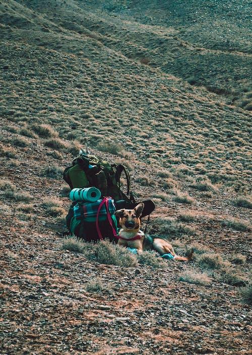 Kostnadsfri bild av äventyr, backpacker, camping, däggdjur