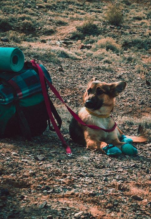 Dog Beside Bag