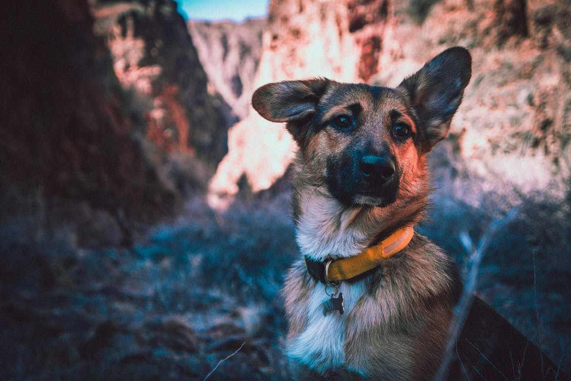 Photo of Black and Tan Dog