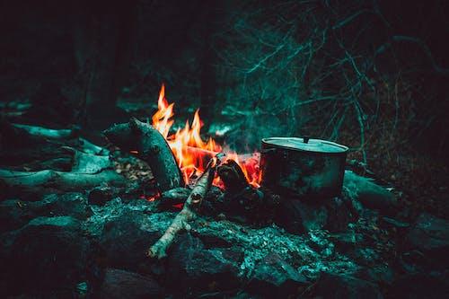 クッキング, 木材, 火, 火災の無料の写真素材