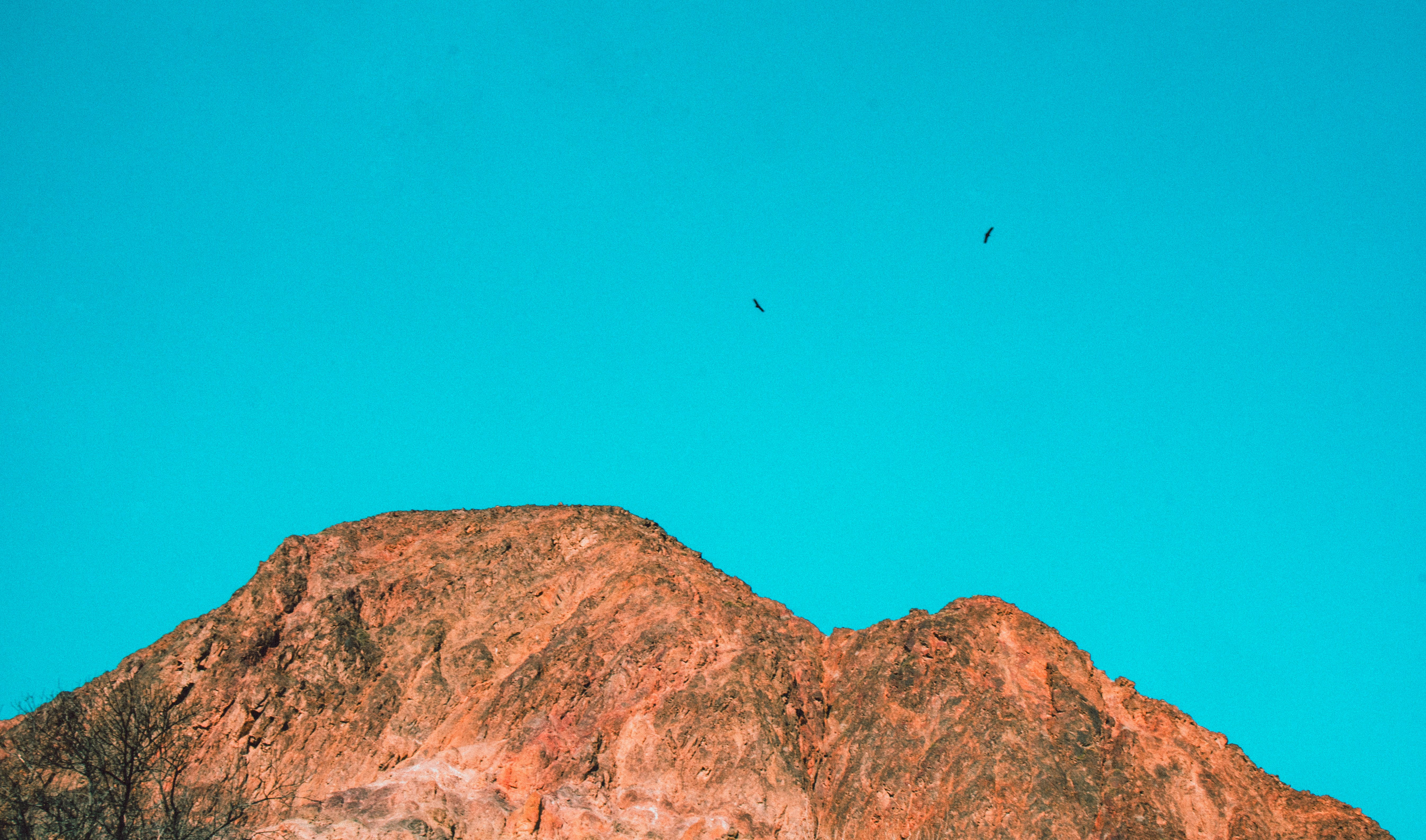 Free stock photo of blue sky, camping, canion, eagle