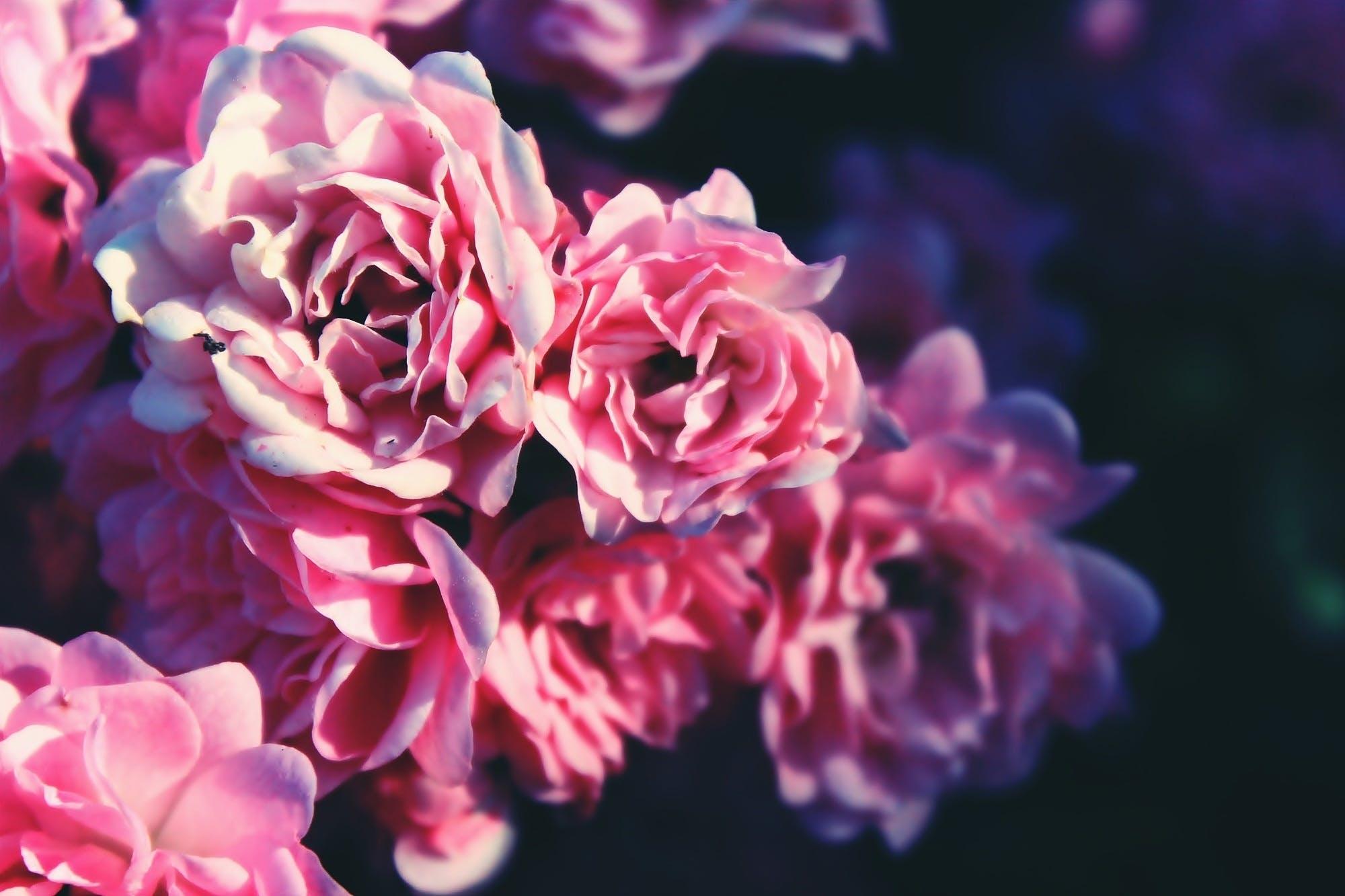 Kostenloses Stock Foto zu blumen, blütenblätter, pflanze, verschwimmen