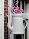 flowers, house, plant