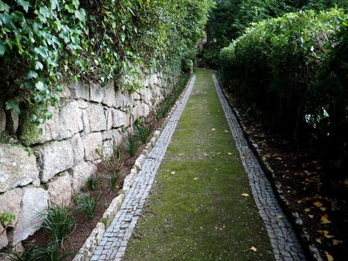 花園綠色路徑 的 免費圖庫相片