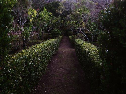 花園小徑 的 免費圖庫相片