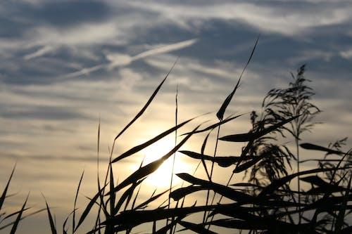 Fotos de stock gratuitas de césped, cielo, nubes, silueta