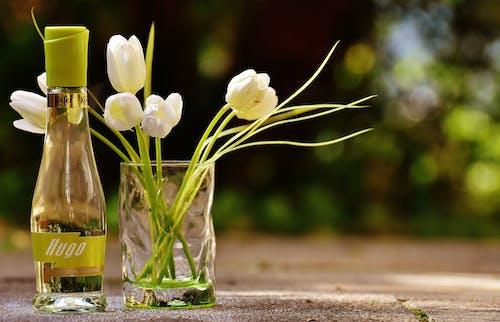 Ảnh lưu trữ miễn phí về cadillac 52, cận cảnh, cánh hoa, chai