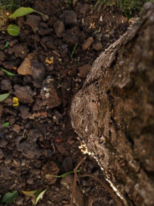 Ingyenes stockfotó barna, barna háttér, fa témában