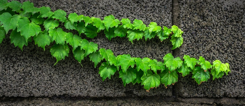Free stock photo of pattern, wall, climbing plant, green