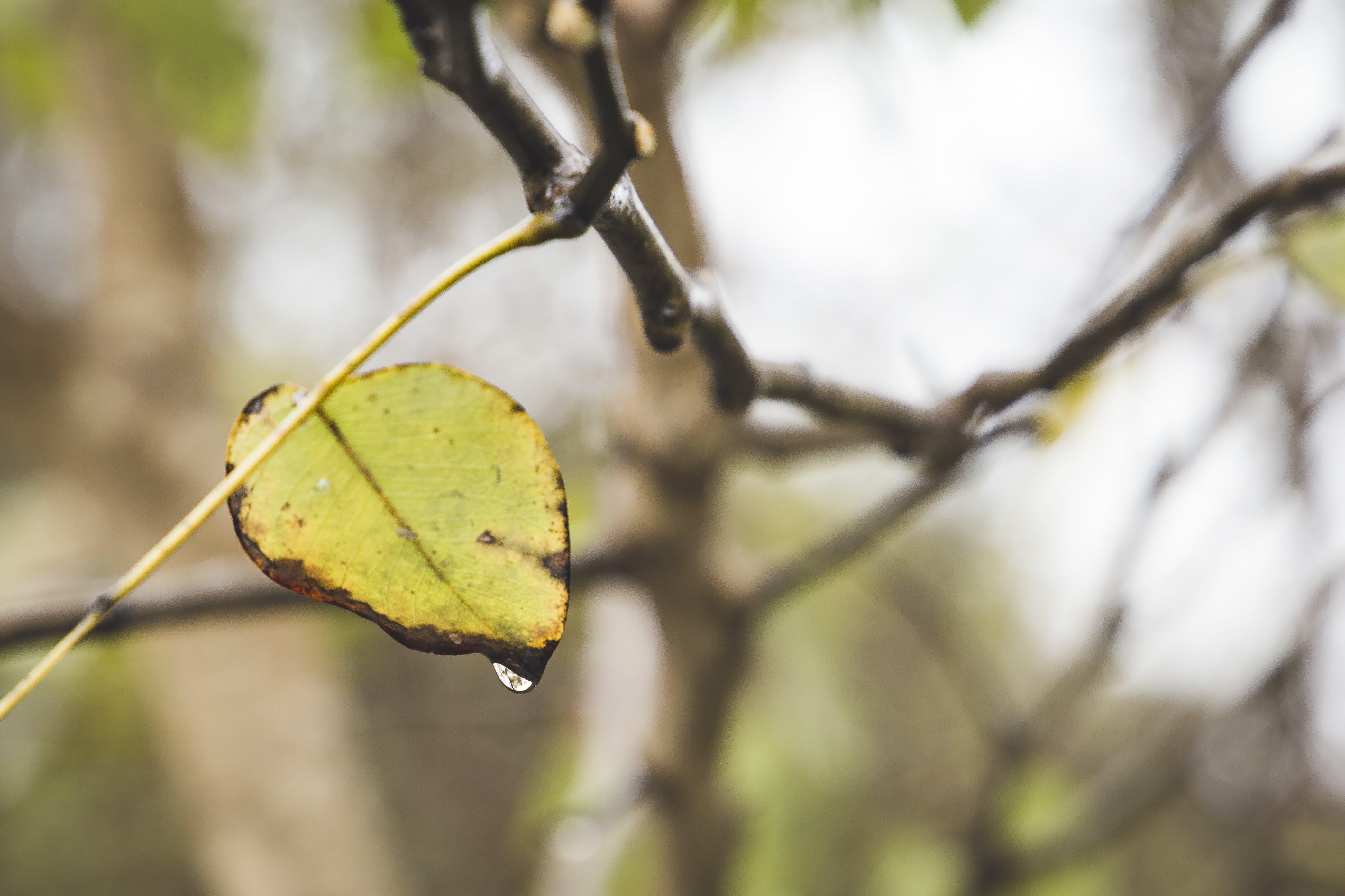 Kostenloses Stock Foto zu baum, regen, stimmung, wasser
